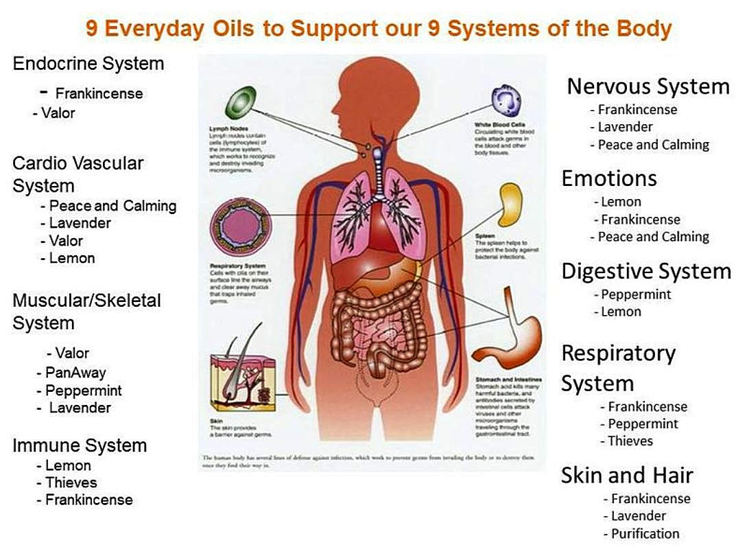 9 Everyday Oils To Support Our 9 Systems Of The Body Inner Joy