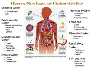 9 everyday oils to support our 9 systems of the body